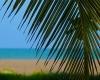 hotel-benin-grand-popo-awale-plage-plage-beach-bar